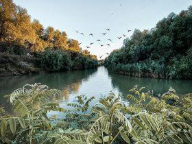 Fauna si flora din Delta Dunarii
